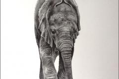 Little One - baby elephant