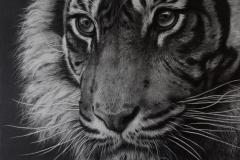 Solitude - Tiger