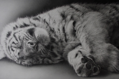 Sound Asleep - Tiger cub