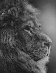 lion pencil drawing hyperrealism by Julie Rhodes