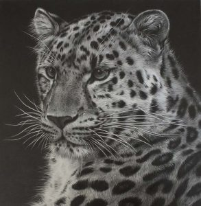 Leopard pencil drawing by Julie Rhodes