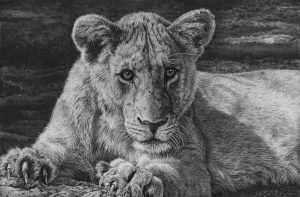 wildlife gallery pencil drawings