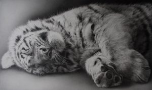sleeping tiger pencil drawing