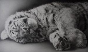 Lion, pencil drawing, hyper realism, julie rhodes, wildlife art, lion art, pencil lion,