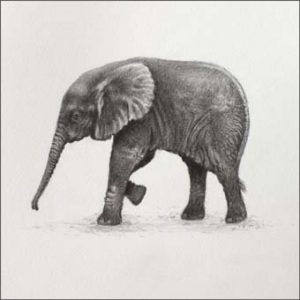 baby elephant miniaturte drawing Julie Rhodes