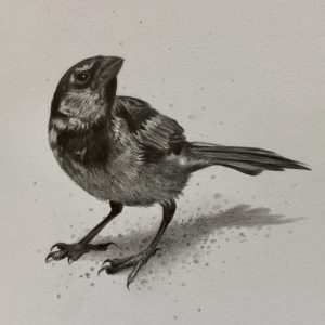 Pencil drawing of sparrow birds