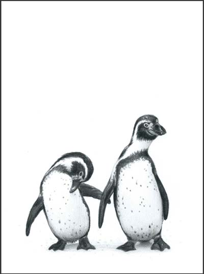 penguins pencil drawing print