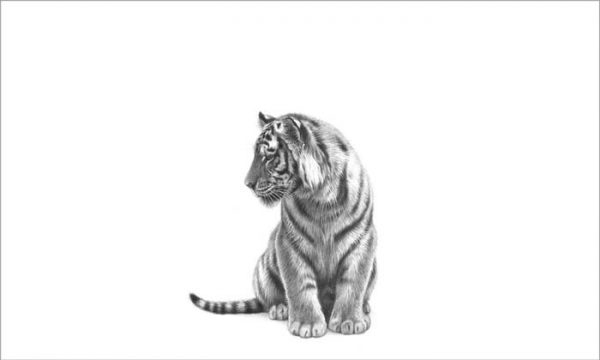 tiger cub drawing print