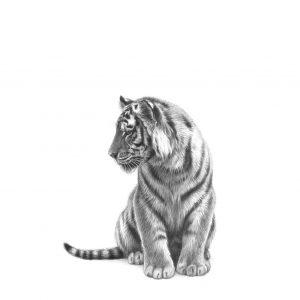 little tiger cub pencil print