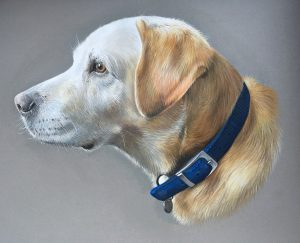 Pet portrait commission in pencil pastel Labrador dog