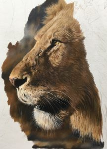 Lion in pencil pastel Julie Rhodes wildlife art