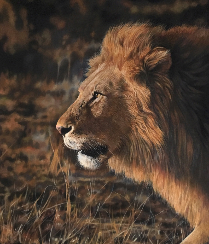 Male lion pastel colour drawing