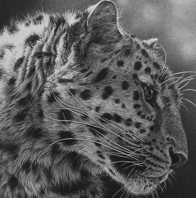 leopard drawing in black and white