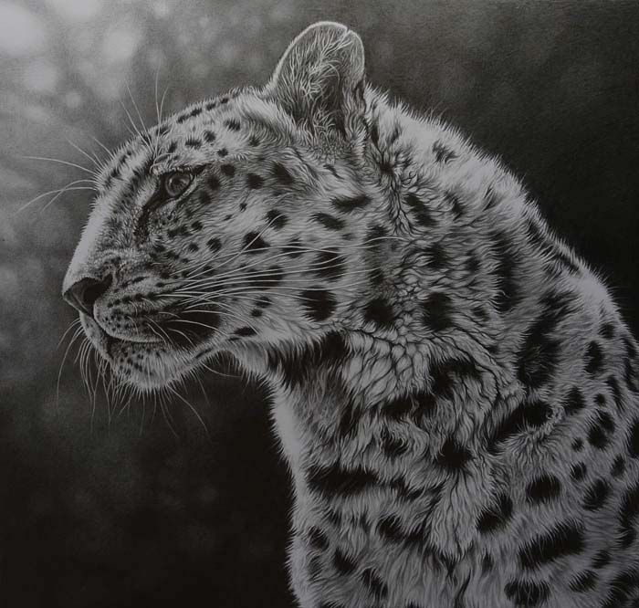 leopard drawing in pencil graphite by Julie Rhodes