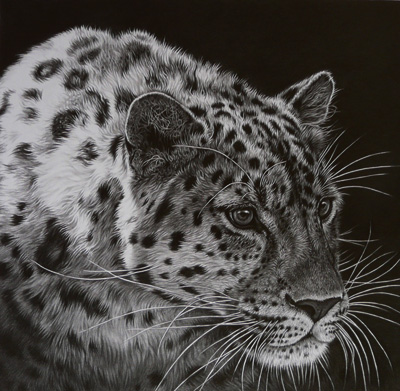 Leopardpencil drawing by Julie Rhodes Wildlife art