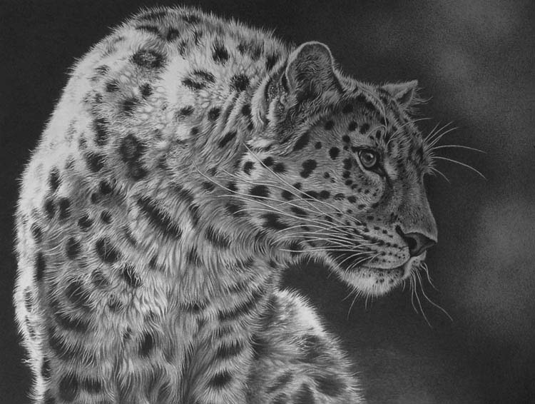 leopard realistic drawing by Julie Rhodes