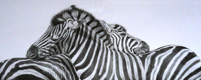 zebras pencil drawing together in love. by Julie Rhodes