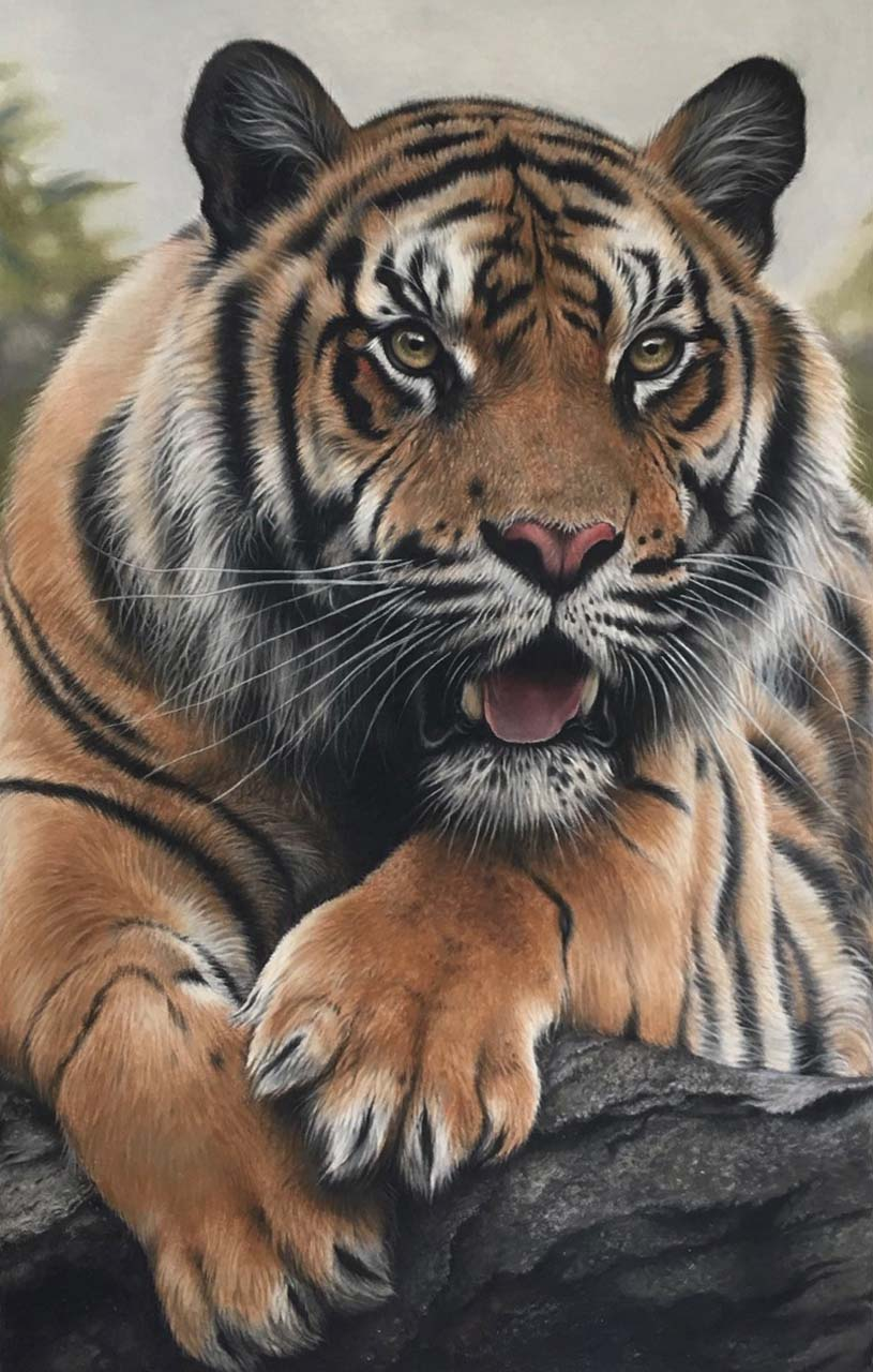 tiger pastelpencildrawing realistic wildlife art Julie Rhodes