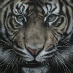 Tiger pastel drawing realism by Julie Rhodes
