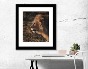 lion in pastel artwork Julie Rhodes