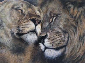 male and female lion, lion and lioness drawing Julie Rhodes