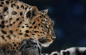 leopard pastel drawing artwork