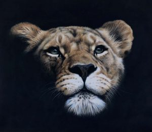 lioness black artwork pastel drawing by Julie Rhodes