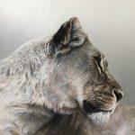 lioness original acrylic paintingt artwrok