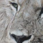 detail lion pastel drawing