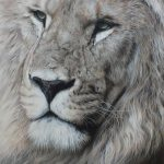 lion pastel drawing wildlife art by Julie Rhodes