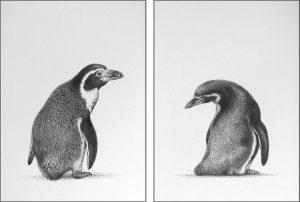 penguin pencil drawing pair original art by Julie Rhodes