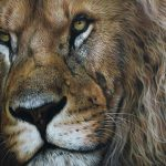 flame lion pastel art drawing by julie rhodes