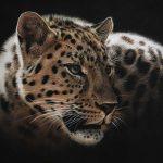 amur leopard pastel pencil drawing art