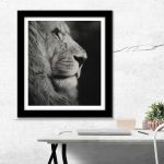 male lion monochrome pastel drawing art by Julie Rhodes wildlife