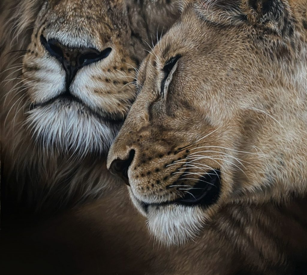 Lions in love couple, pastel art drawing Julie Rhodes