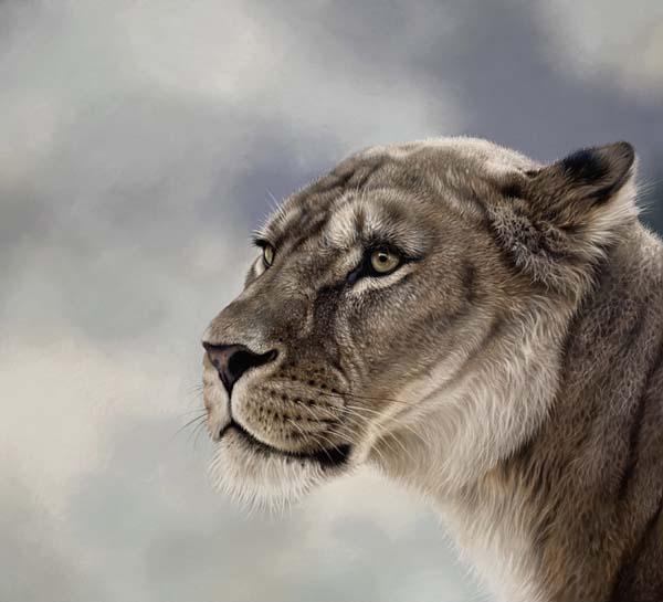 lioness pastel drawing wildlife art